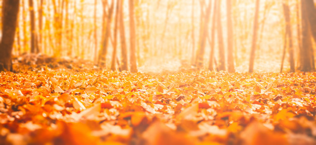 dried-leaves-from-autumn-forest_78895-1482